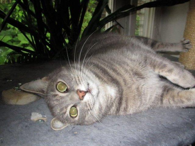 katt22