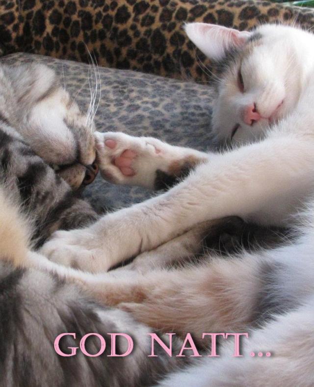 katt23