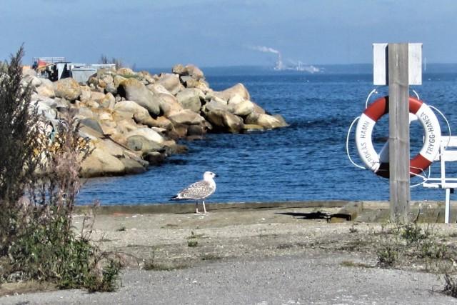 krokås hamn (2)